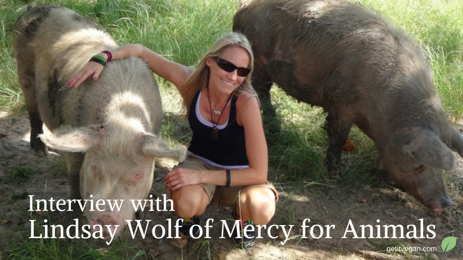 Interview with Lindsay Wolf of Mercy for Animals